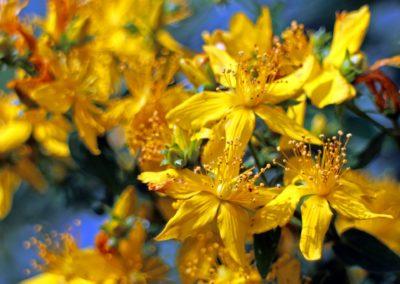 blossom-374511_1920