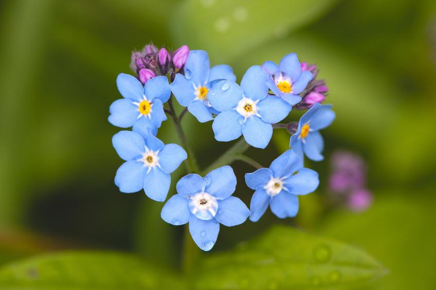 vignette focus - Séances individuelles de découverte des plantes